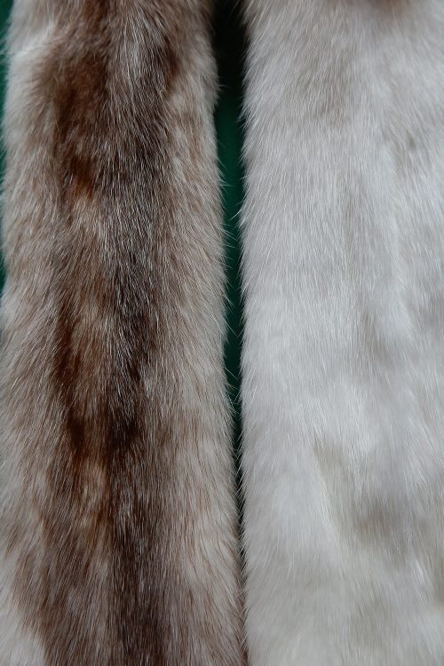 <strong></strong> Wild Fur
